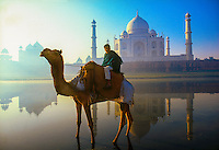 Man atop camel standing in Yamuna River with Taj Mahal in background, Agra, India