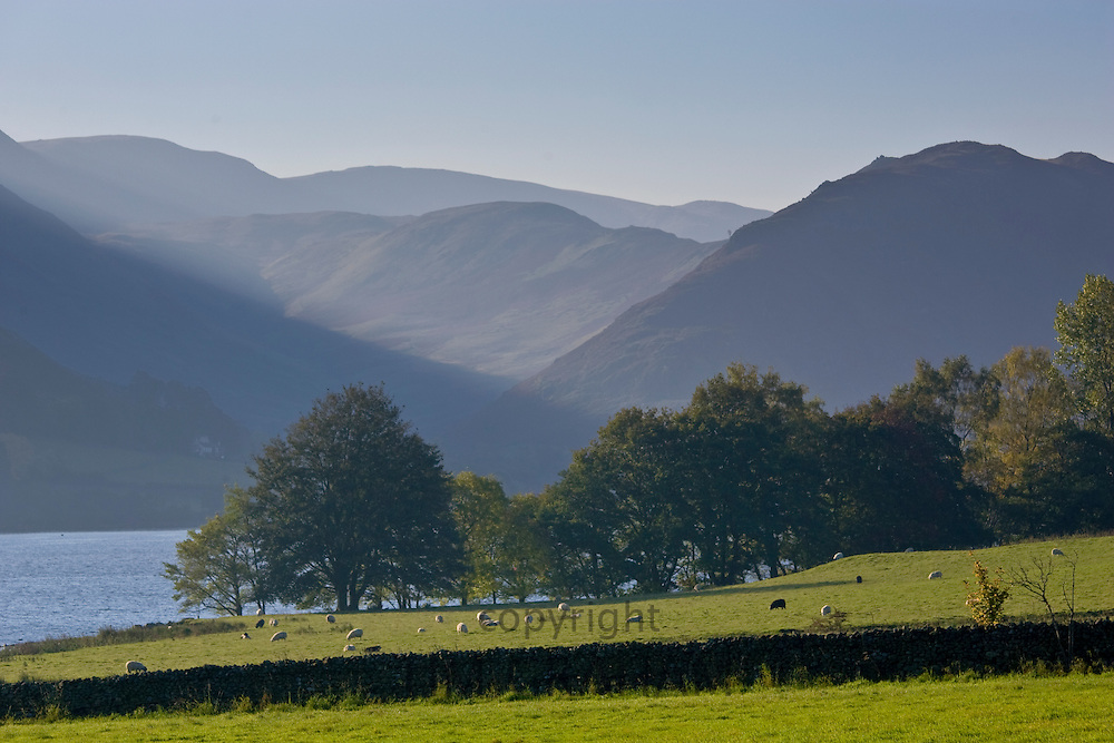 Sheep grazing by Lake Ullswater, Lake District, England, United Kingdom
