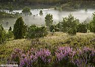 Lueneburger Heide mit Nebel, BRD