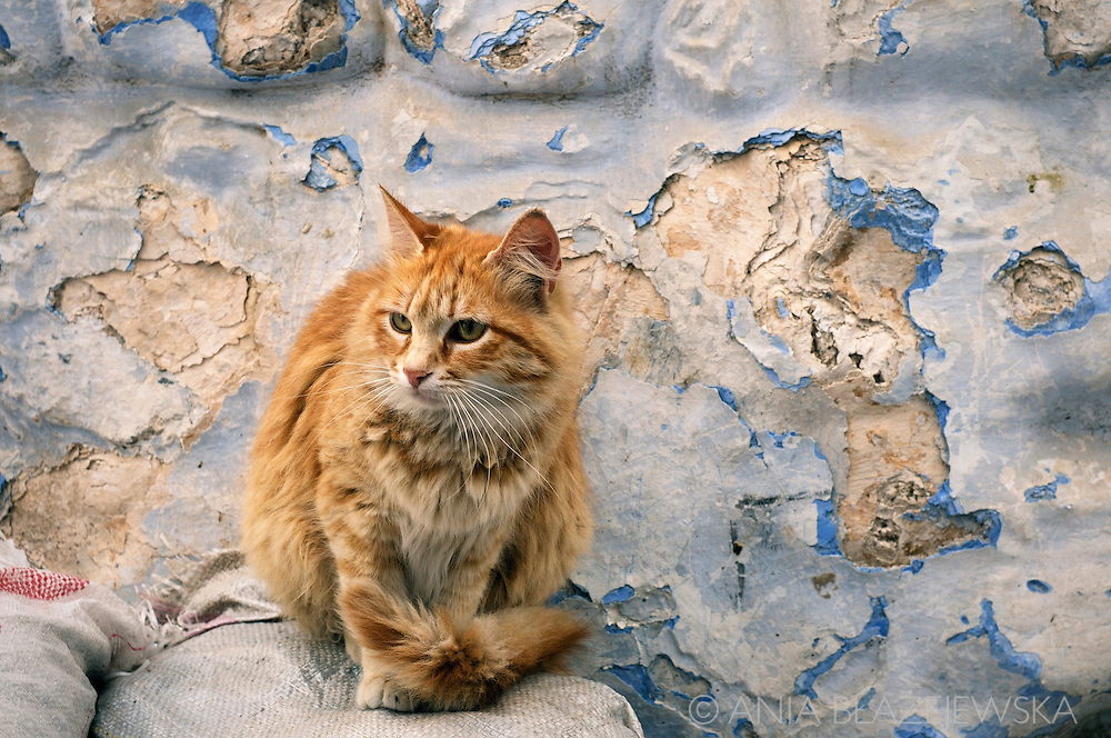 Morocco. Ginger cat from Chefchaouen.