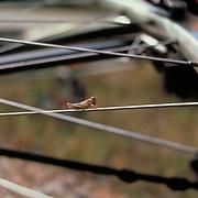 Grasshopper perched on bicycle spoke. Bike-tography by Martha Retallick.