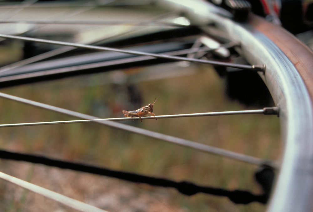 Grasshopper perched on bicycle spoke. Bike-tography by Martha Retallick.