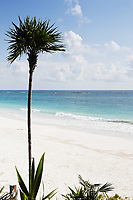 view of the beautiful white sand beach with palm tree  of tulum in yucatan mexico