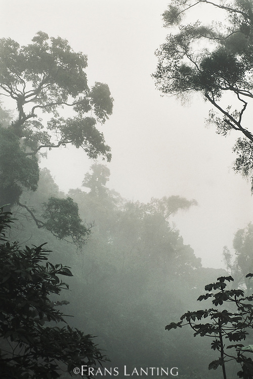 Epiphytes in mist, Atlantic Forest, Serra dos Orgaos National Park, Brazil