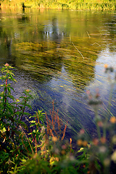 UK ENGLAND WEST BERKSHIRE HUNGERFORD 26JUN08 - Healthy flora in the riverbed of  the river Kennet flowing through Hungerford in West Berkshire, western England...jre/Photo by Jiri Rezac / WWF UK..© Jiri Rezac 2008..Contact: +44 (0) 7050 110 417.Mobile:  +44 (0) 7801 337 683.Office:  +44 (0) 20 8968 9635..Email:   jiri@jirirezac.com.Web:     www.jirirezac.com..© All images Jiri Rezac 2008 - All rights reserved.