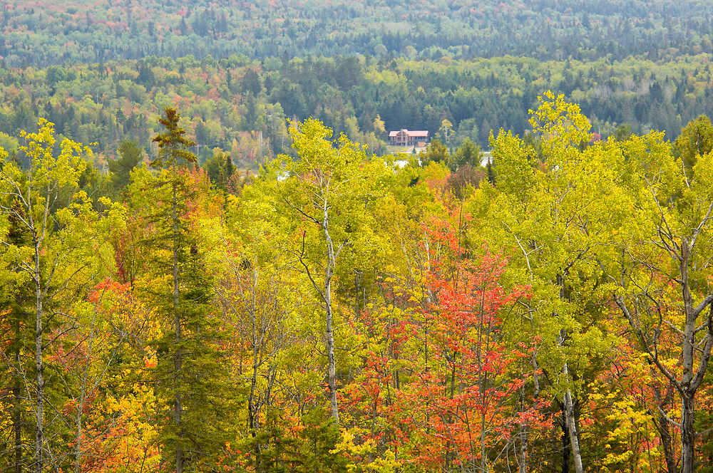 Fall colored Trees, Indian Summer, near Indian Lake, Adirondack Mountains, New York, United States of America