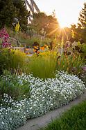 20170605 Summer Sunrise Gardens