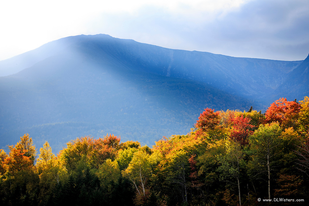 Fall trees highlighted by sunlight in the White Mountains of NH.
