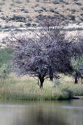 NAMIBIA MALTAHOEHE 19APR14 - A river and trees near the Hudup campsite near Maltahoehe, Namibia.<br /> <br /> <br /> <br /> jre/Photo by Jiri Rezac<br /> <br /> <br /> <br /> &copy; Jiri Rezac 2014