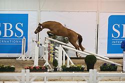 311, High Tech Du Ghene A Clous<br /> SBS Keuring 2016 Gesves<br /> © Hippo Foto - Counet Julien