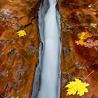 The Chute<br /> Zion National Park, Utah, USA