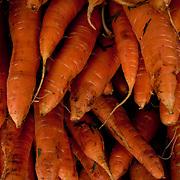 July 8, 2010 - Bronx, NY : The Marble Hill Youthmarket. Carrots.