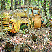 A classic vintage yellow pickup truck that is slowly decomposing amidst the trees in the Old Car City junkyard in Georgia.