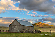Old ranch barn and Harsin Butte on the Nature Conservancy's Zumwalt Prairie Preserve near Enterprise, Oregon, USA