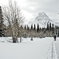 woman back country skier, skiing on fresh powder snow with backpack two medicine valley glacier national park, montna