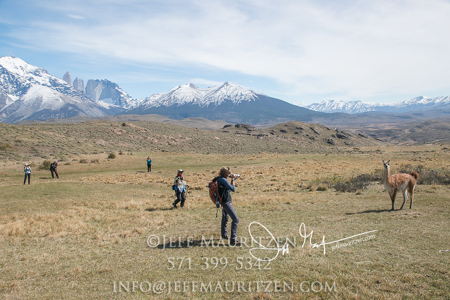 Hikers takes a photo of a Guanaco in Torres del Paine National Park, Chile.