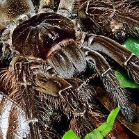 Trésors d'Amazonie  -  Tirage 50 x 65 cm plastifié contrecollé sur alu plastifié - photo 30 x 45 cm + 10 cm bord noir