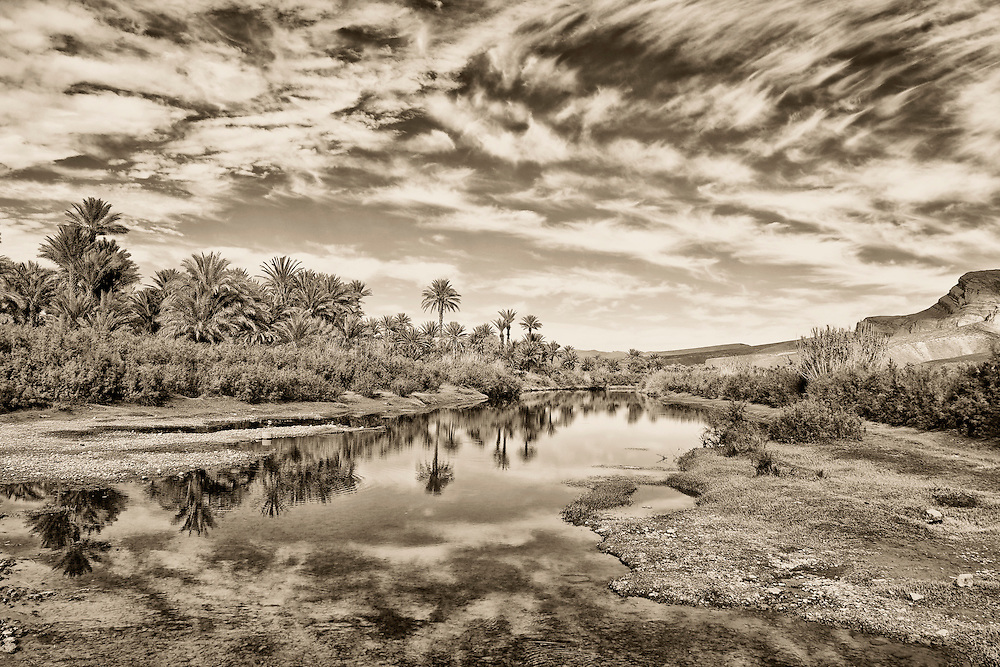 Date palm oasis at the Draa river in the Draa valley, Morocco.