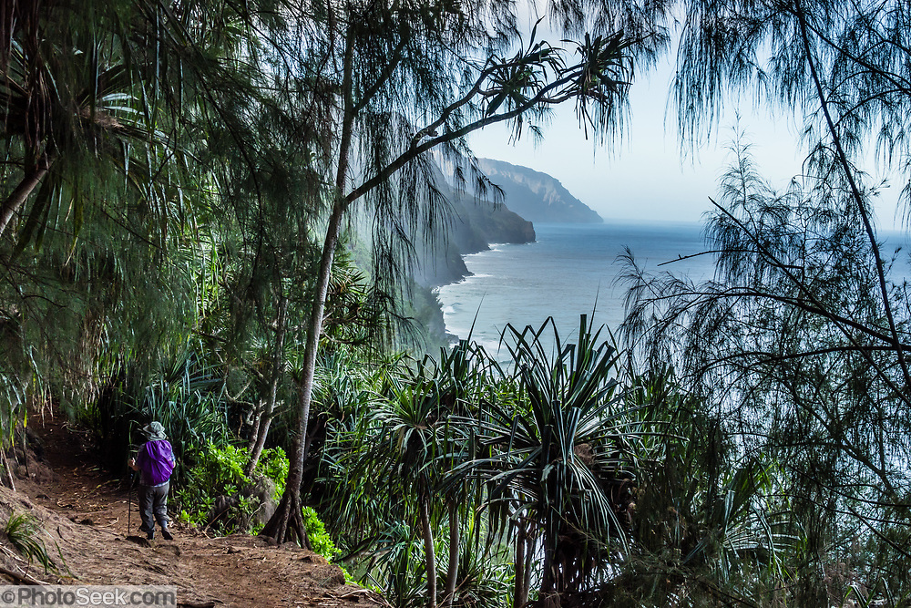 A hiker admires sea cliffs above the Pacific Ocean along the beautiful Kalalau Trail in Na Pali Coast State Wilderness Park, Kauai, Hawaii, USA. A beautiful day hike along the slippery Kalalau Trail goes from Ke'e Beach to Hanakapiai Beach, with a rougher side trip to impressive Hanakapiai Falls. To reach Hanakapiai Valley's waterfall, follow the signed clay trails for a moderately strenuous 8.8 miles round trip with 2200 feet cumulative gain (measured on my GPS), and bring plenty of fresh water. I recommend boots with sturdy tread, hiking poles, plus water shoes for the several stream crossings. Arrive early to get parking at the trailhead in Haena State Park at the end of the Kuhio Highway (Hawaii Route 560). The gorgeous Kalalau Trail was built in the late 1800s to connect Hawaiians living in the remote valleys. No permit is needed for day hiking to Hanakapiai Falls. But hikers going onwards from Hanakapiai Beach to Hanakoa and Kalalau Valleys require a camping permit from the Hawaii Department of Land and Natural Resources (HDLNR).