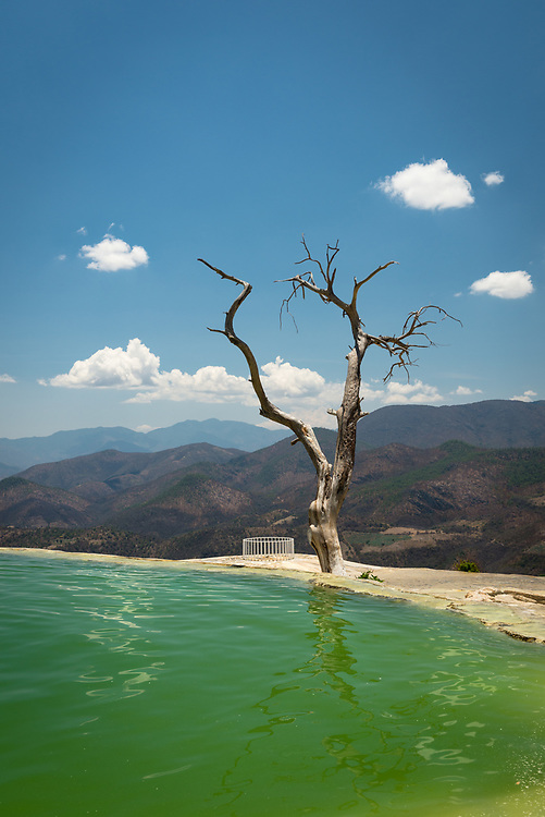 Mineral spring pool and tree at Hierve el Agua in Oaxaca, Mexico