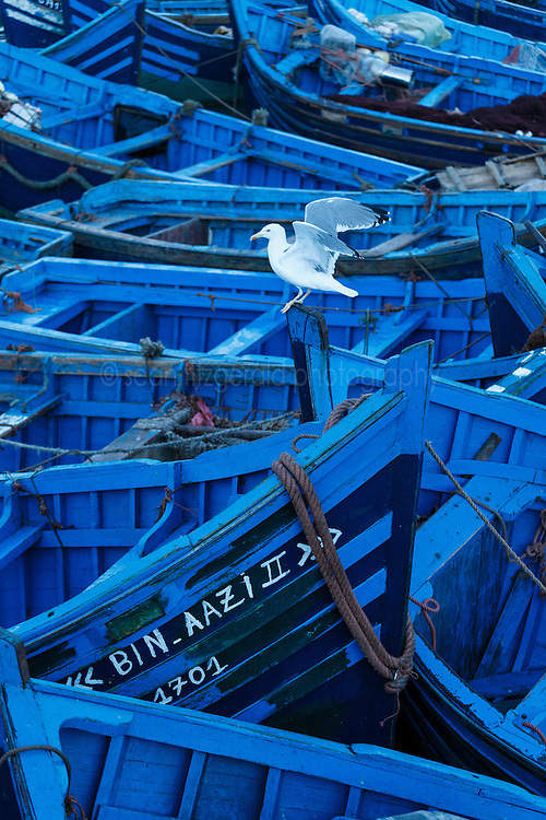 Fishing boats in harbor, Essaouira, Morocco.