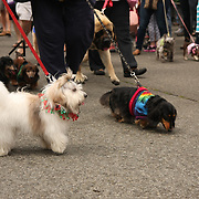 Dog Parade at the 2013 Fremont Fair.