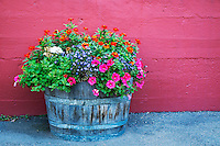 Korbel Winery Potted Flowers Against Red Wall, Guerneville, California