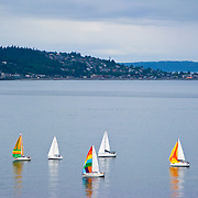 Sailboats sailing near Elliott Bay Marina, Puget Sound, Seattle, Washington
