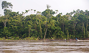 Longboat at Napo River, Ecuador. The river banks are covered with dense rainforest vegetation.
