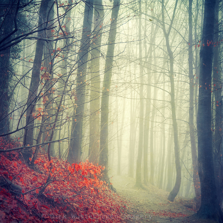 Forest around the corner shrouded in  fog, with autumn leaves glowing in the rain.<br />