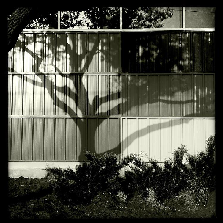 Tree shadows in black and white - Houston, Texas