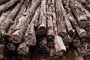 Cut tree trunks for firewood at Isla Paridas. Chiriqui Gulf, Chiriqui province, Panama, Central America.