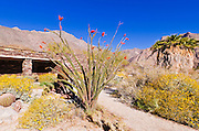 Desert garden at the visitor center, Anza-Borrego Desert State Park, California USA
