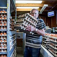 Nederland, Vinkeveen, 4 augustus 2017.<br /> Jan Senten van Pluimveebedrijf de toekomst sorteert kistjes met eieren in diverse formaten<br /> Het bedrijf is een begrip in Vinkeveen en omgeving en levert scharreleieren en leghennen in diverse formaten aan horecagelegenheden en winkelbedrijven in Amsterdam en omgeving Utrecht<br /> <br /> Foto: Jean-Pierre Jans