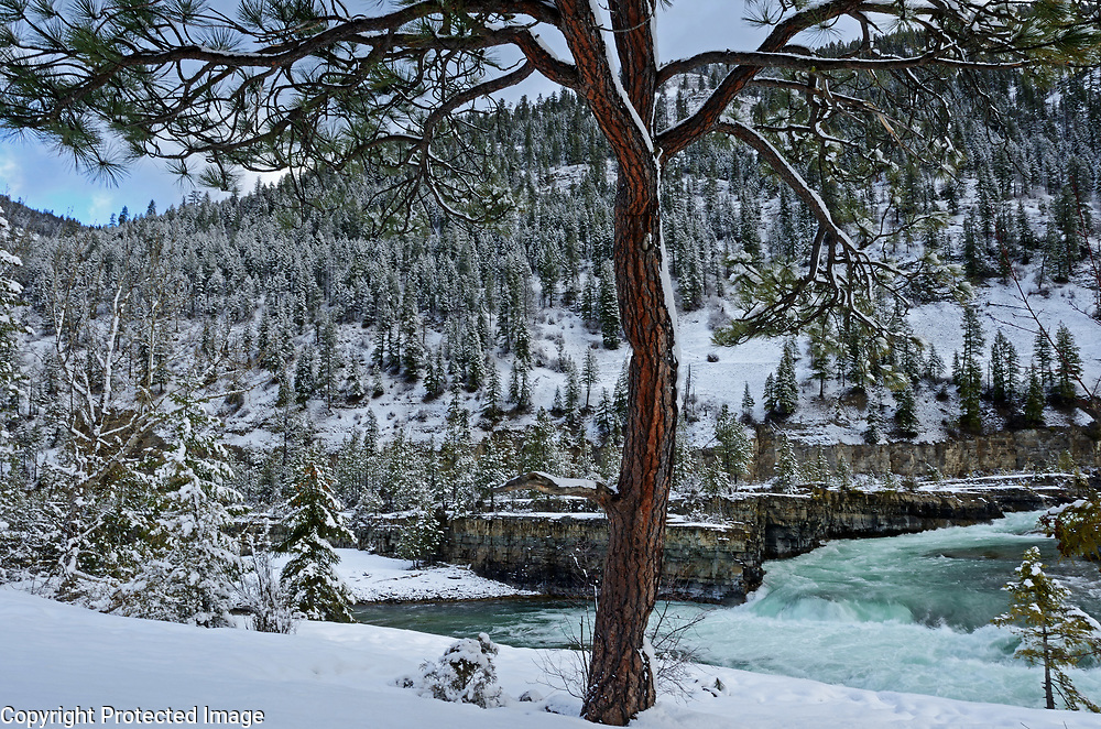 Kootenai Falls and a ponderosa pine at sunrise in winter 2016-2017. Kootenai River Valley in Lincoln County, northwest Montana.