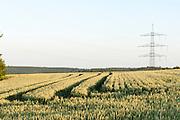 Landschaft, Felder bei Bödigheim, Odenwald, Baden-Württemberg, Deutschland