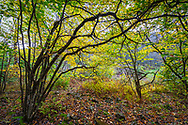 The beech trees that line Gandy Creek in West Virginia usher in the vibrant autumn yellows, dotting the forest with a phosphorescent glow, interrupted only by the lines drawn by branches against the back-lit canopy.
