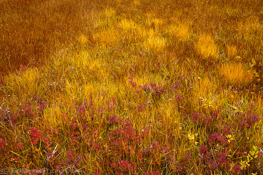 Takh Takh Meadow in autumn, Gifford Pinchot National Forest, Cascade Mountain Range, Washington, USA in autumn, Cascade Mountain Range, Washington, USA panorama