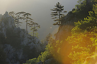 Dumbrava, Domogled National park, Southern Carpathians, Romania, Rewilding Europe site