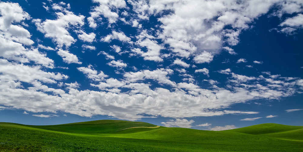 The rolling hills of the Palouse in Southeastern Washington on a warm late Spring day with a bright blue, cloud-filled sky.