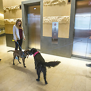 WASHINGTON, DC - OCT07:  Charity Struthers (right) and her dog Benny, greet Amber Willis and her dog Brody, outside the elevators of the Park Chelsea Apartments, October 7, 2016, in Washington, DC. As new apartment buildings continue sprouting around downtown DC, developers know that a large percentage of renters in the city have dogs and make their choices of buildings based largely on pet-friendliness. So they go out of their way to be welcoming to dogs.  (Photo by Evelyn Hockstein/For The Washington Post)