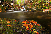 Autumn in Old River reserve