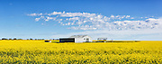 equipment shed and shelter in a field of flowering canola crop under blue sky and cumulus cloud at Cressy, Victoria, Australia. <br />
