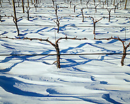 Shinn Estate Vineyard, Mattituck, Oregon Road, Long Island, New York North Fork, Winter Snow