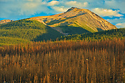 Burn from fire. Collin Range<br />