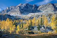 Alpine larches (Larix lyallii) below Mount Monica 3072 m (10079 ft), Purcell Mountains British Columbia