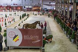 083, J Nobel vh Donkmeer Z<br /> BWP Hengsten keuring Koningshooikt 2015<br /> © Hippo Foto - Dirk Caremans<br /> 22/01/16