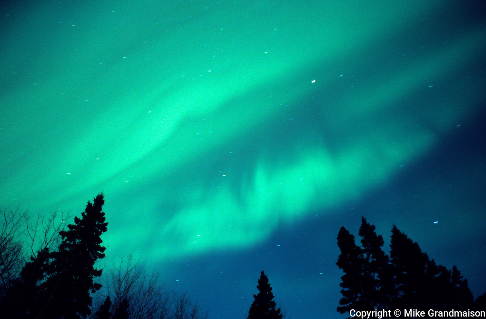 Northern lights or aurora borealis  and trees; forest <br /> Birds Hill Provincial Park<br /> Manitoba<br /> Canada