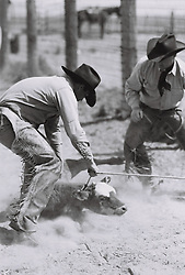 Cowboys roping a calf on a ranch