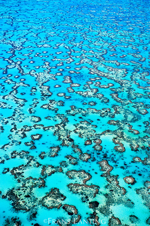 Coral reefs (aerial), Great Barrier Reef, Australia